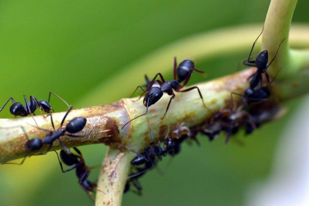 ᐅᐅ】Hausmittel gegen Ameisen ✅ TOP 9 Tipps! ✅